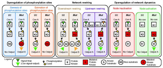 Network attacking mutations