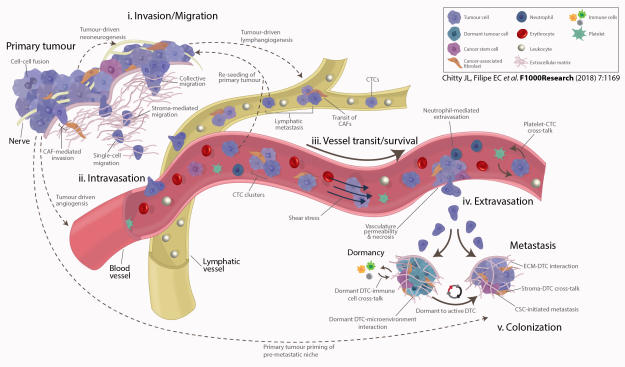 The Metastatic Cascade in Cancer