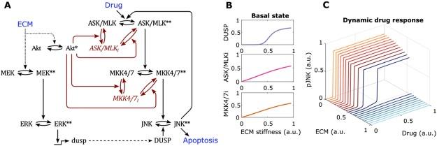 Extracellular matrix interplay with MAPK-JNK Signalling