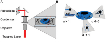 Optical Tweezers Schematic for measuring intracellular viscosity