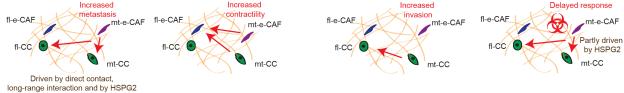 Cancer cell CAF crosstalk